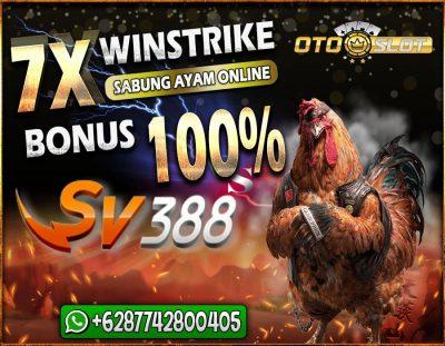 Event Winstrike Sabung Ayam Online di Otoslot Dengan Bonus 100%